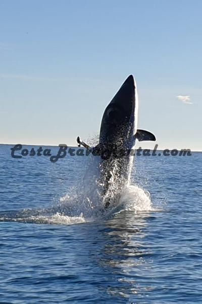 CostaBravaRental.com Radikal Shark Estartit Costa Brava Spain, What to do at the Costa Brava, Escala Pals Activity Jump