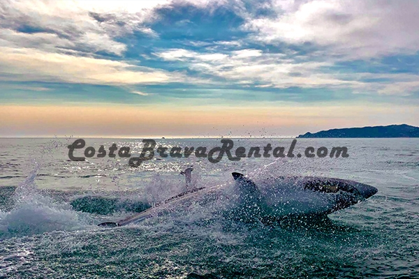 CostaBravaRental.com Radikal Shark Estartit Costa Brava Spain, What to do at the Costa Brava, Escala Pals Activity Medes Islands Shark Attraction
