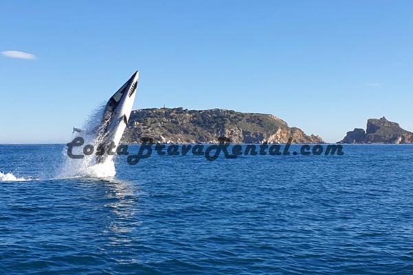 CostaBravaRental.com Radikal Shark Estartit Costa Brava Spain, What to do at the Costa Brava, Escala Pals Activity Medes Islands Shark