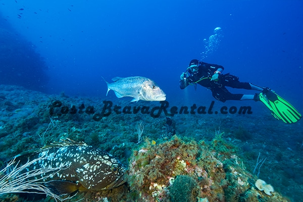 Aquatica Diving Medes Islands Costa Brava Spain